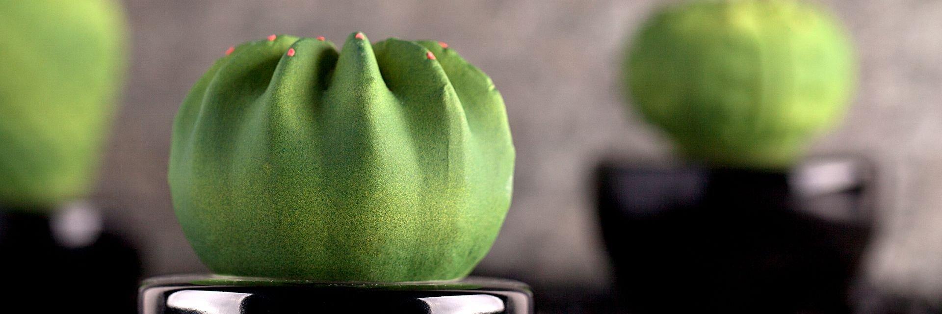 diffusori-cactus2